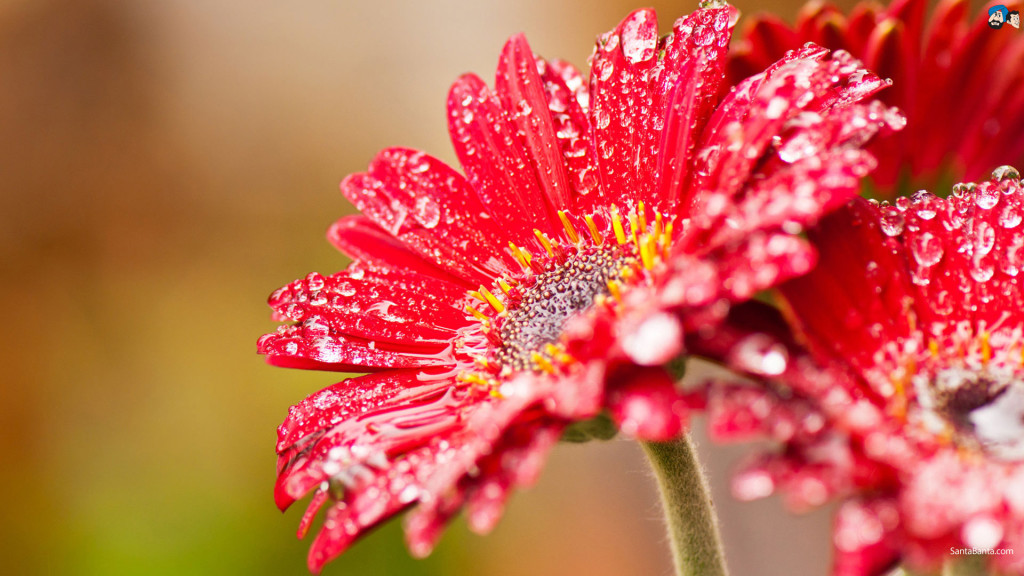flowers-165a (1)