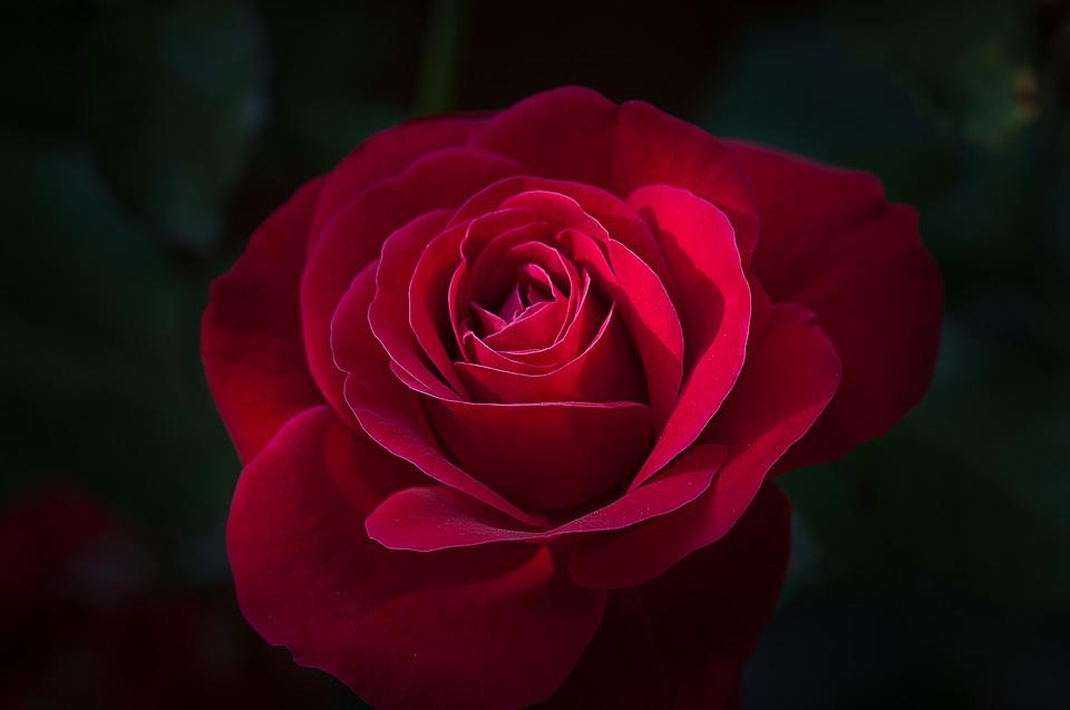 flower-1421899_960_720